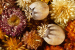 driedflowermacro-cleaned-srgb-web600